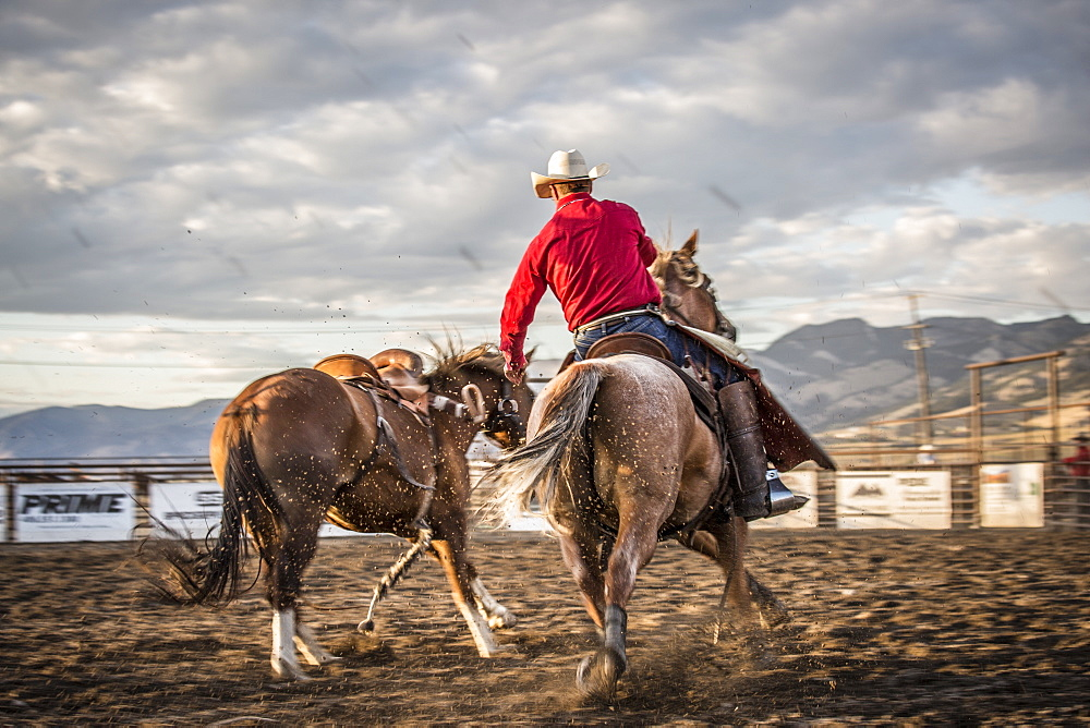 Rodeo cowboy pickup man with bucking bronco in arena, Montana