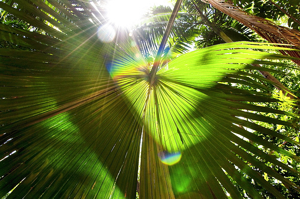 Sunlight Shines Through A Thick Tropical Canopy With A Palm Frond