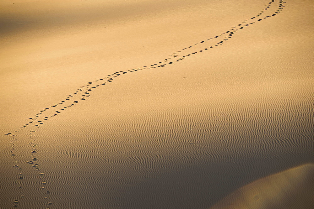Foot prints in sand dunes at sunset