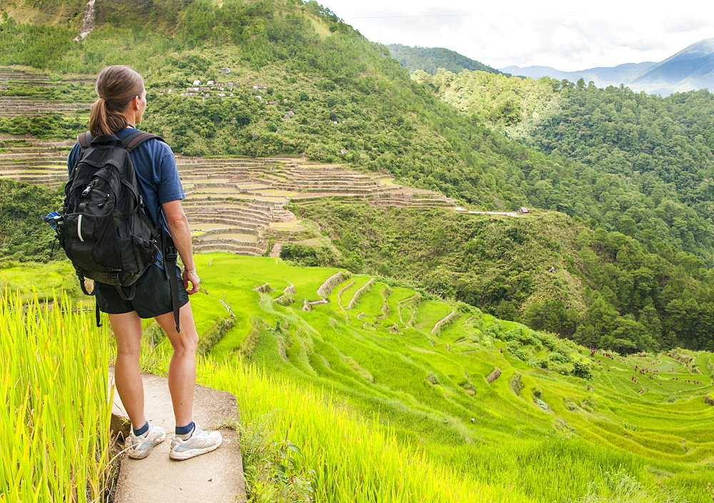 Woman Exploring Maligcong Rice Terrace In Luzon, Philippines