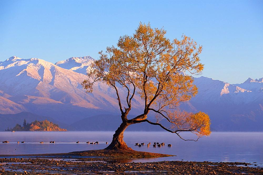 Famous Wanaka Lake Tree In New Zealand