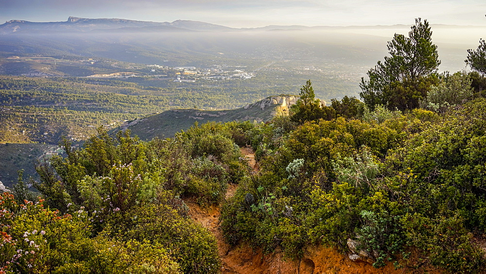 view of garrigue landscape on a winter morning at sunrise with little fog in the background and ocher soil, close to La Ciotat in the South of France