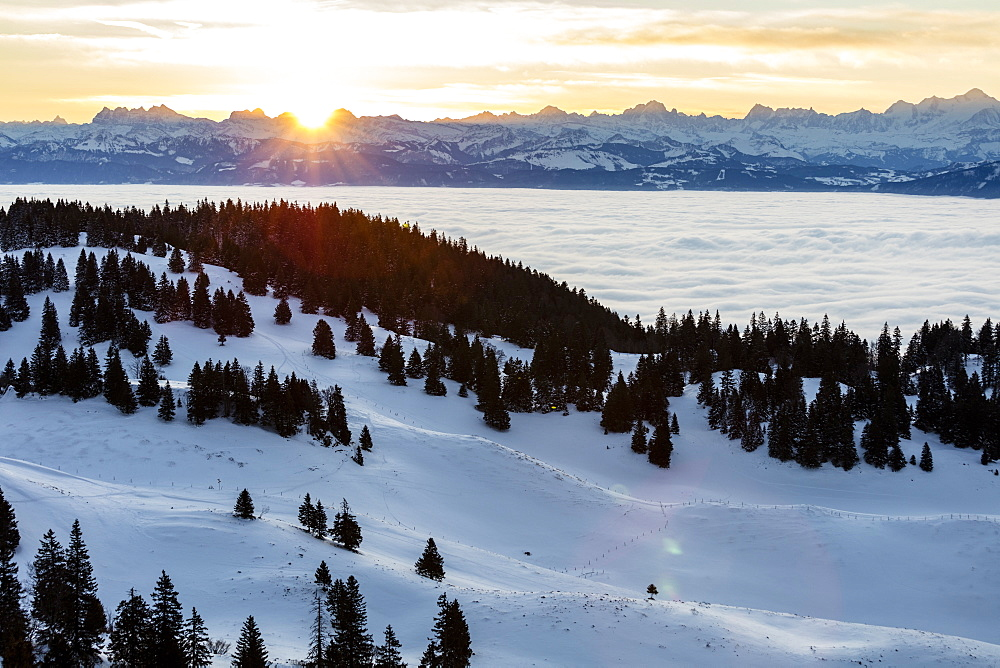 alpine chain in the background on a sunny morning with the Geneva lake under a sea of clouds and the Jura mountains on the foreground with snow and spruces in the Vaud Canton, Switzerland
