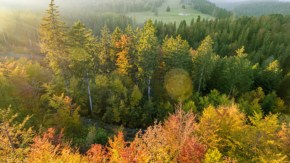 view of warm autumnal lights and colors in a forest of Spruce (Picea Abies) and other trees in the Vaud Canton, close to Arzier, Switzerland