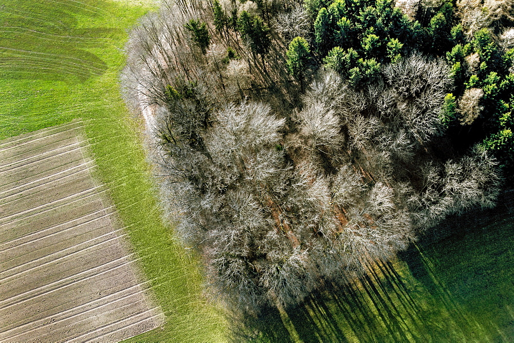 aerial view of trees in Springtime, without leaves, forming a kind of island in the middle of agriculture fields, a mix of green and grey-brownish colors, in a location close to Matran, Fribourg Canton, Switzerland