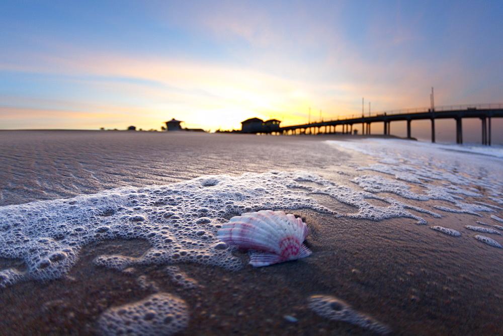 A shell on the beach near Huntington beach pier at sunrise.