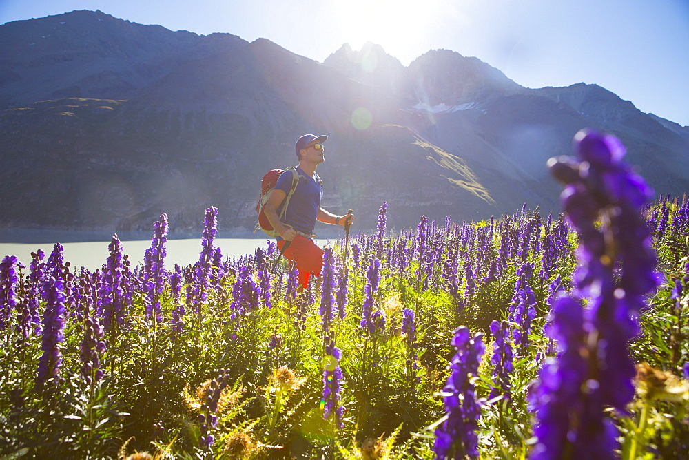 A Male hiker in sunny flower field in the Swiss Alps. Halfway the Haute Route, a classic multi day trekking in Europe.