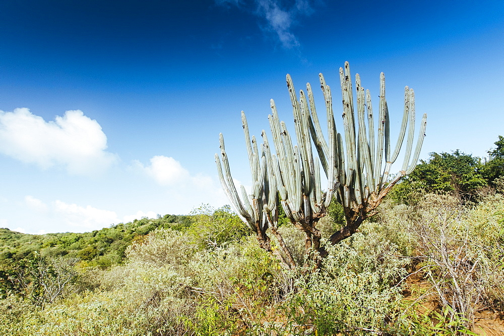 Arid landscape of the British Virgin Islands