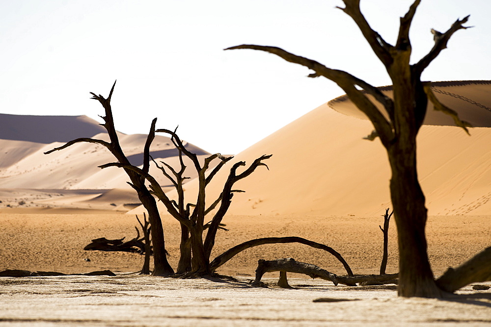 Beautiful scenery with dead trees in desert, Deadvlei, Sossusvlei, Namib Naukluft National Park, Namib Desert, Namibia