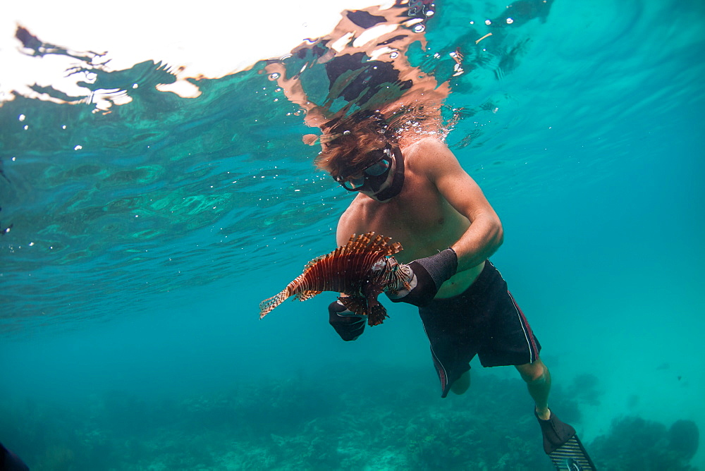 Man handling lion fish after spearing it, Atlantic Ocean