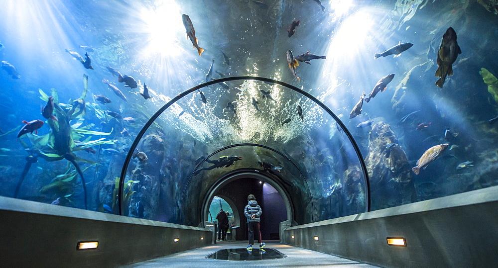Boy admiring Oregon Coast Aquarium ocean exhibition, Oregon, USA