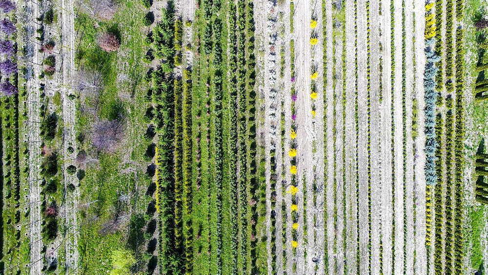 Aerial view of tree nursery, Genolier, Vaud Canton, Switzerland