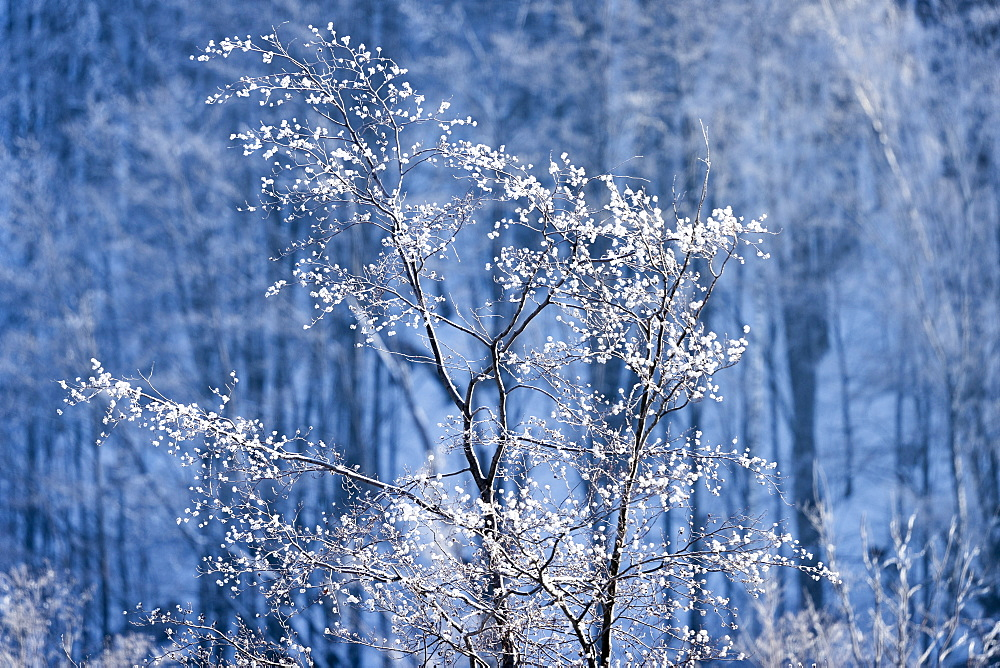Beautiful winter landscape with tree