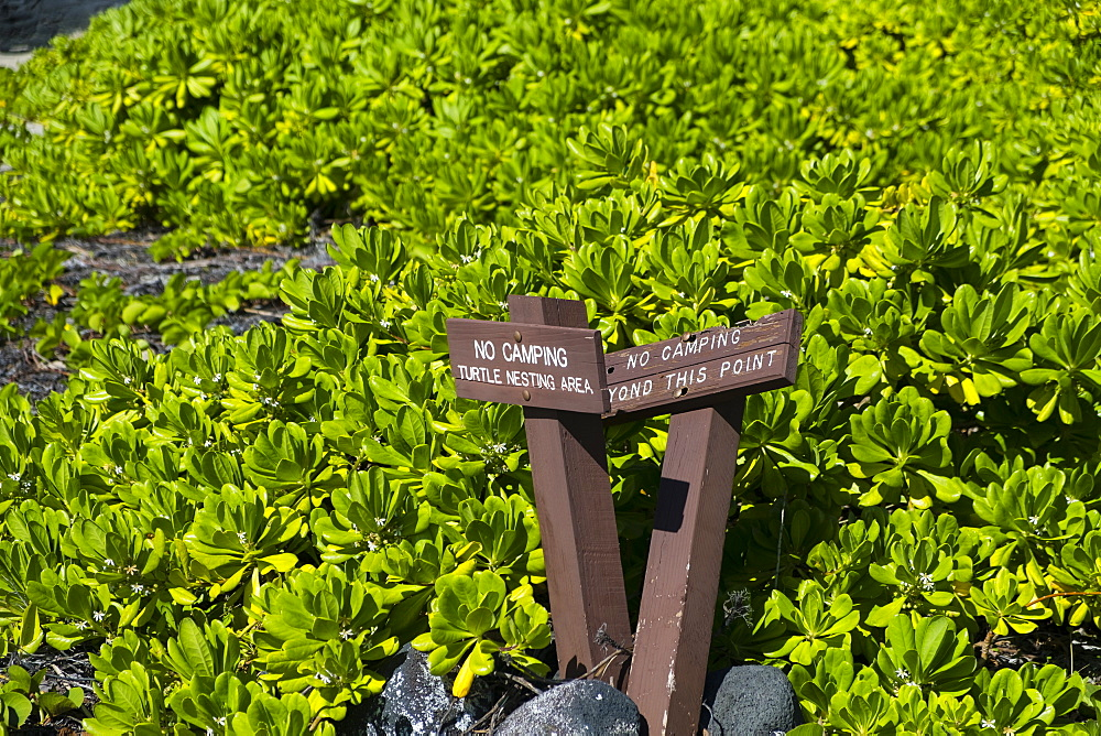 Turtle nesting signs and no camping allowed beyond this point at Halape Beach, a protected wildlife reserve where camping is allowed in Hawaii Volcanoes National Park on the Big Island