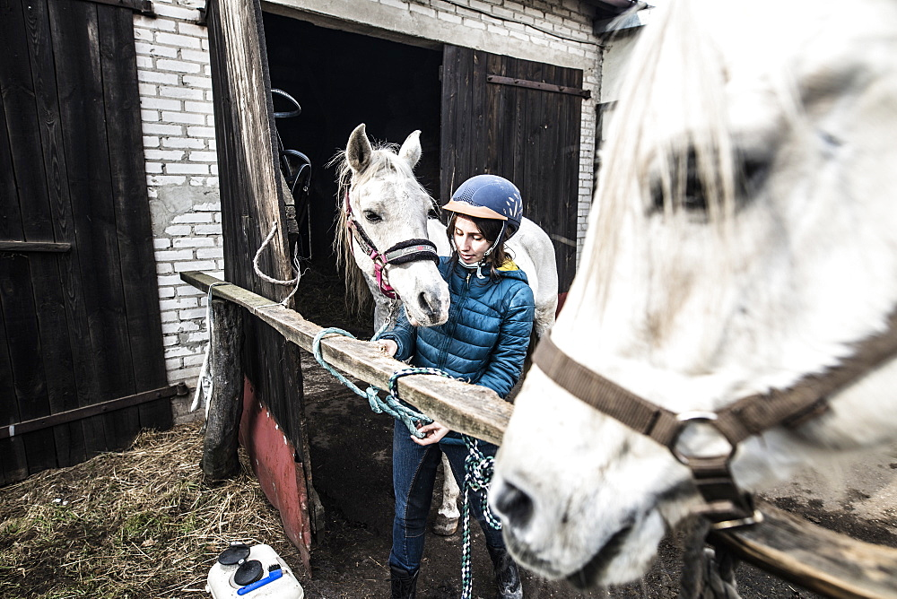 View of single woman with two white horses at stable, Bogatki, Mazowieckie Province, Poland