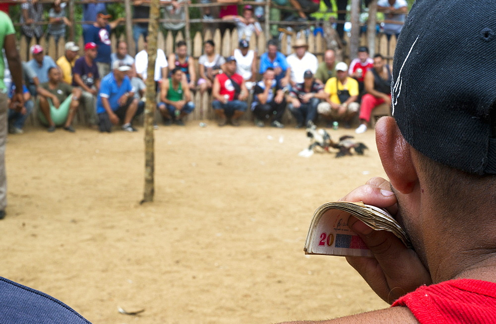 Man holding money while gambling at cock fight in Vinales, Pinar del Rio Province, Cuba