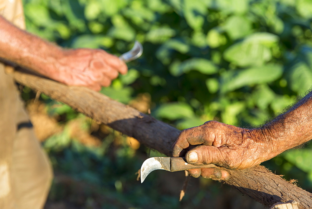 Hands of two men carving wooden pole, Vinales, Pinar del Rio Province, Cuba