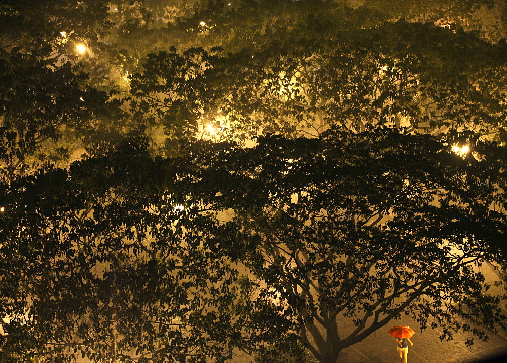 High angle view of tree and woman under red umbrella during downpour in Salcedo Park in Makati City, Makati, Manila, Philippines
