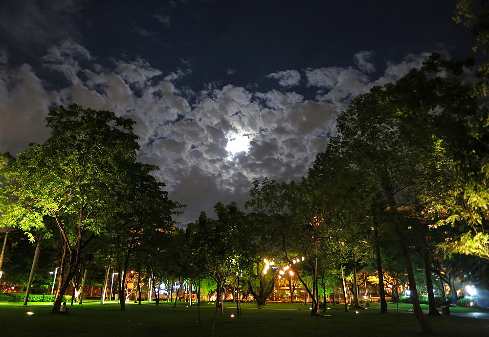 View of trees in Ayala Triangle Park at night in Makati, Philippines