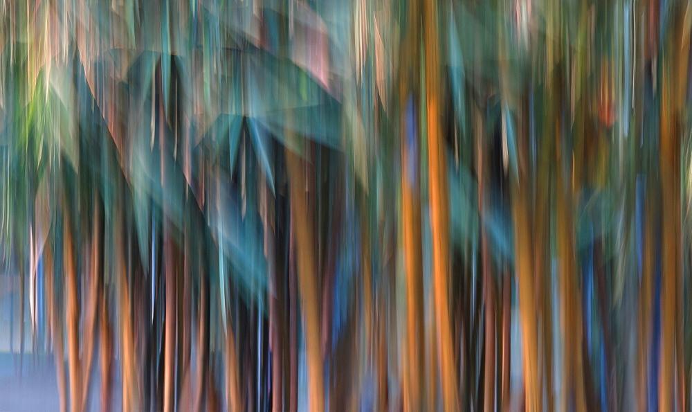 Blurred photo of bamboo, Manila, Philippines