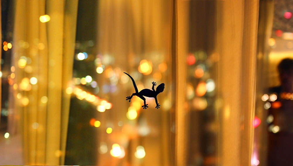 Silhouette of lizard on window in hotel room, Hong Kong, China