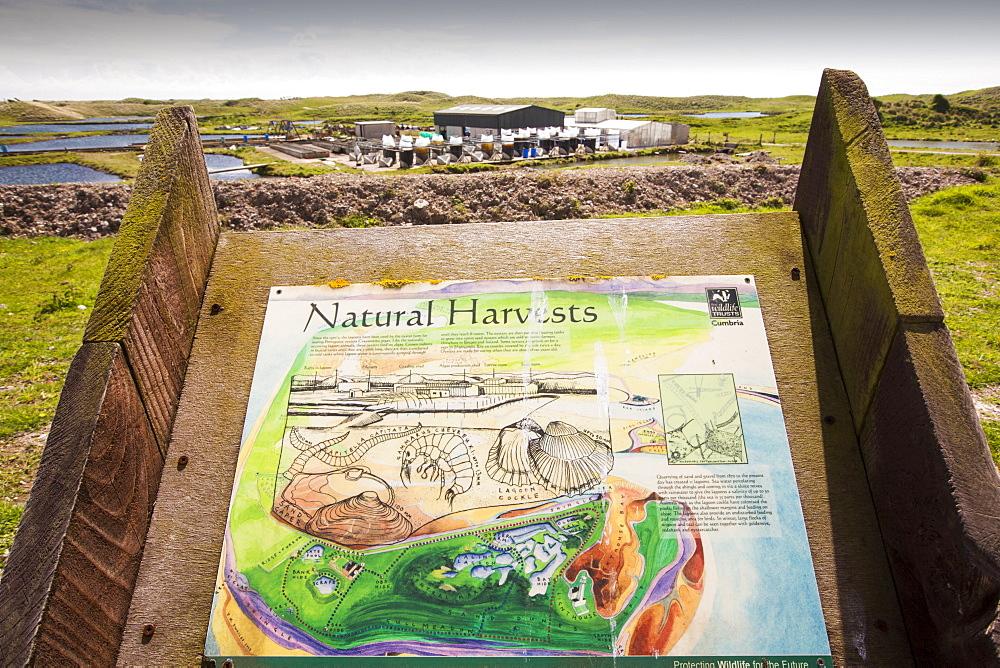 An Oyster farm on South Walney Island, Cumbria, UK.