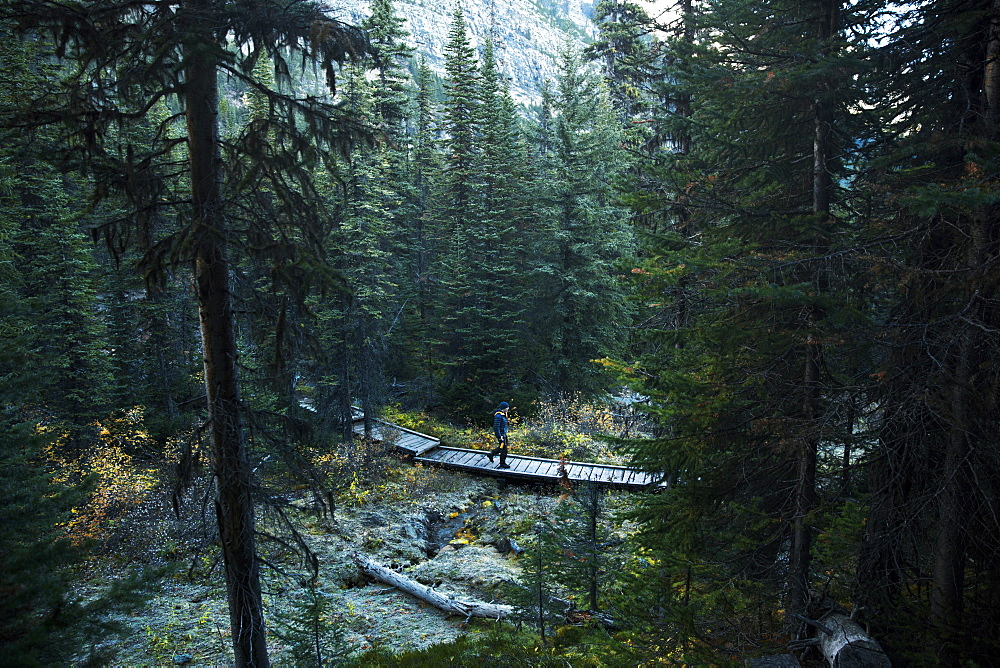 Hiker crossing forest boardwalk of Paradise Valley in Banff National Park, Lake Louise, Alberta, Canada