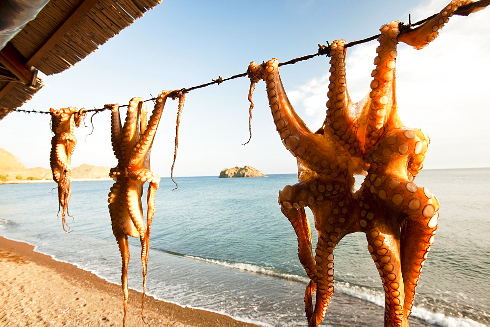 Octopus hung up at a restaurant in Skala Eresou, Lesbos, Greece. - 857-95920