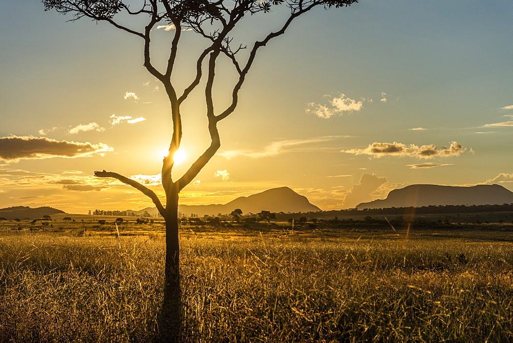 Sunset on beautiful cerrado vegetation landscape with tree silhouette, Chapada dos Veadeiros, Goias, Brazil