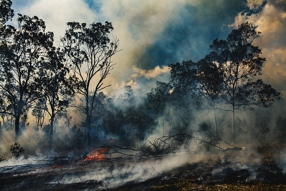 Bush fire near Birnam, Queensland, Australia
