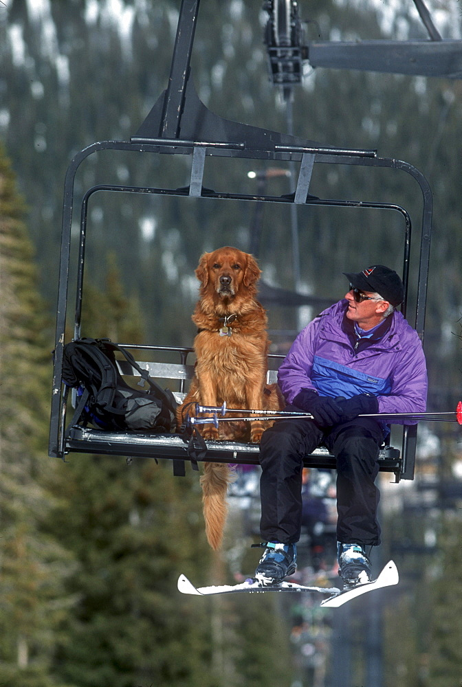 An avalanche rescue dog, trained to sniff out victims buried in avalanches, rides a chairlift with his owner, handler at Wolf Creek Ski Area near Pagosa Springs, Colorado.