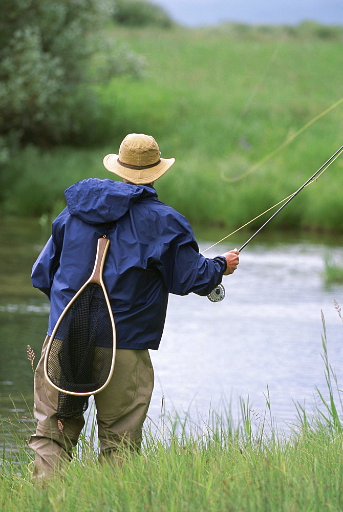 Rear view of a fly-fisherman casting for trout on a small stream in the Rocky Mountains.