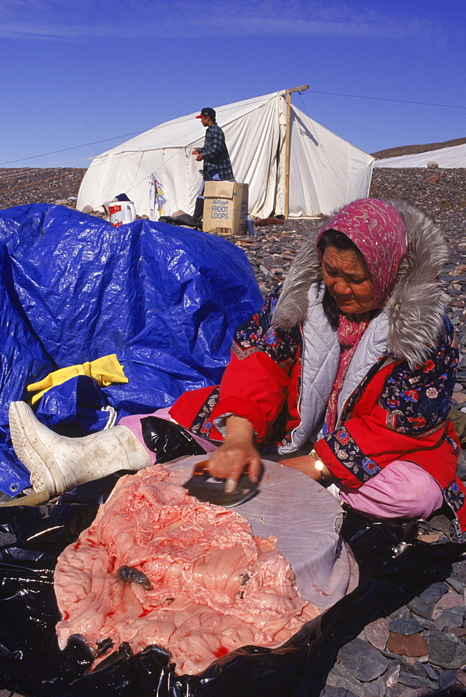 """Camping """"on the land"""" with the Pauloosie Muckpa family. After seal hunt, they caught 3 seals total, two pups and one mother. (They will use the mother to feed the dogs, they did not intend to kill her.)"""