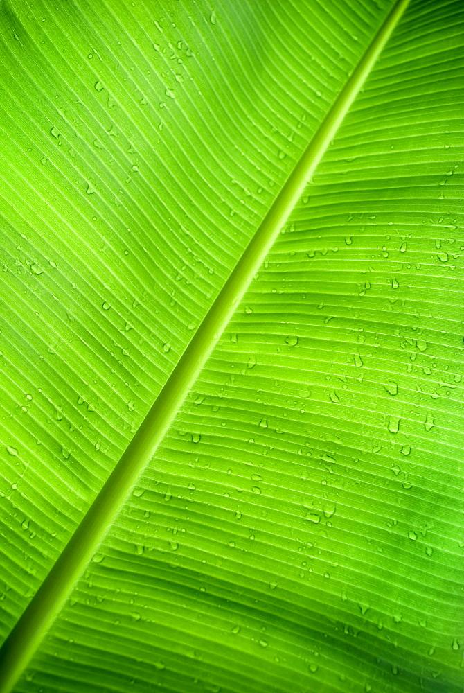 Palm leaf, Natura Cabanas, Dominican Republic.