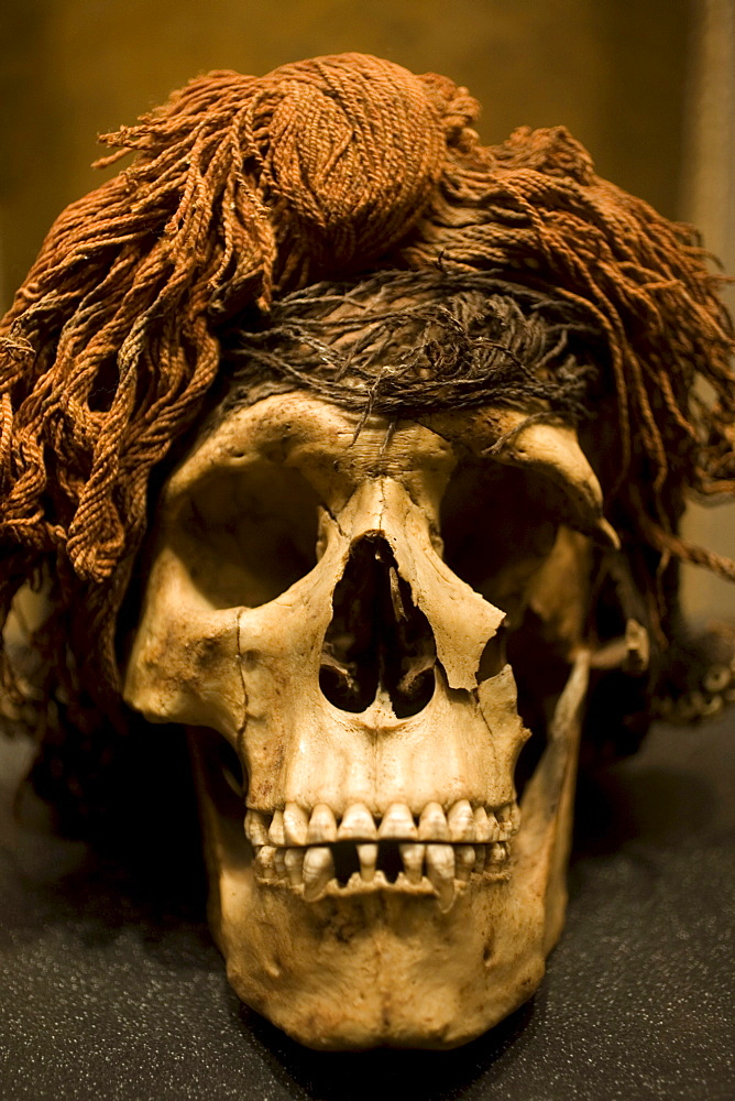 A skull whearing a wig,  found in Chihuahua is displayed in the National Museum of Anthropology in Mexico City,  December 1,  2011. The National Museum of Anthropology and History museum(Museo Nacional de Antropologia e Historia) is located in the histori
