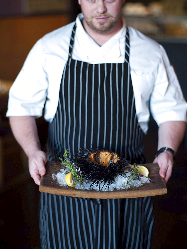 A chef displays a large sea urchin at the Sea Rocket Bistro restaurant in San Diego,  Ca. The urchin was caught only hours earlier by a San Diego diver,  who personally delivers his catch to various seafood restaurants in the area.
