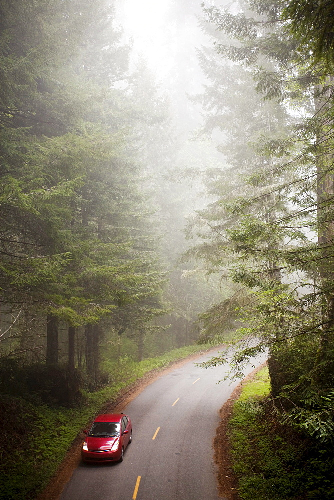 A hybrid vehicle on a windy road surrounded by  fog and redwood trees.