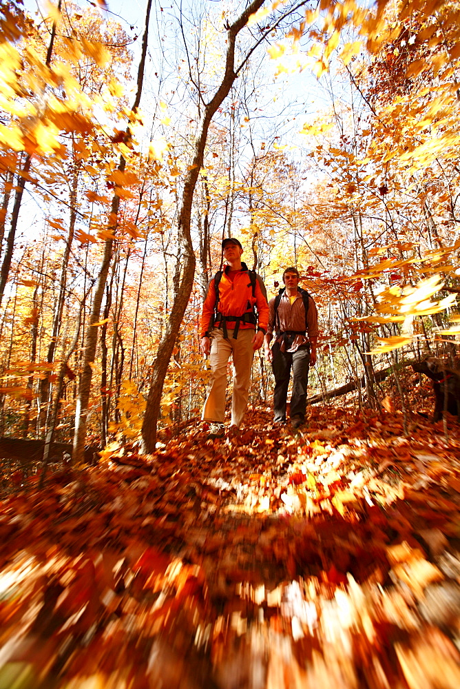 A low-angle, blur-motion image of hikers in an autumn forest in North Carolina.