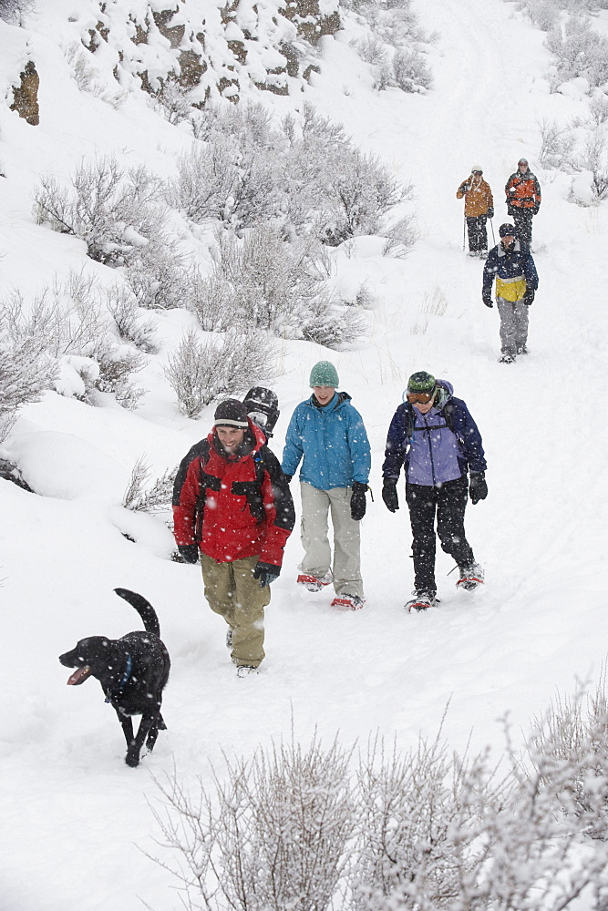 High angle view of a medium sized group of adults and one black dog walking on a trail in the snow in Bend, Oregon.