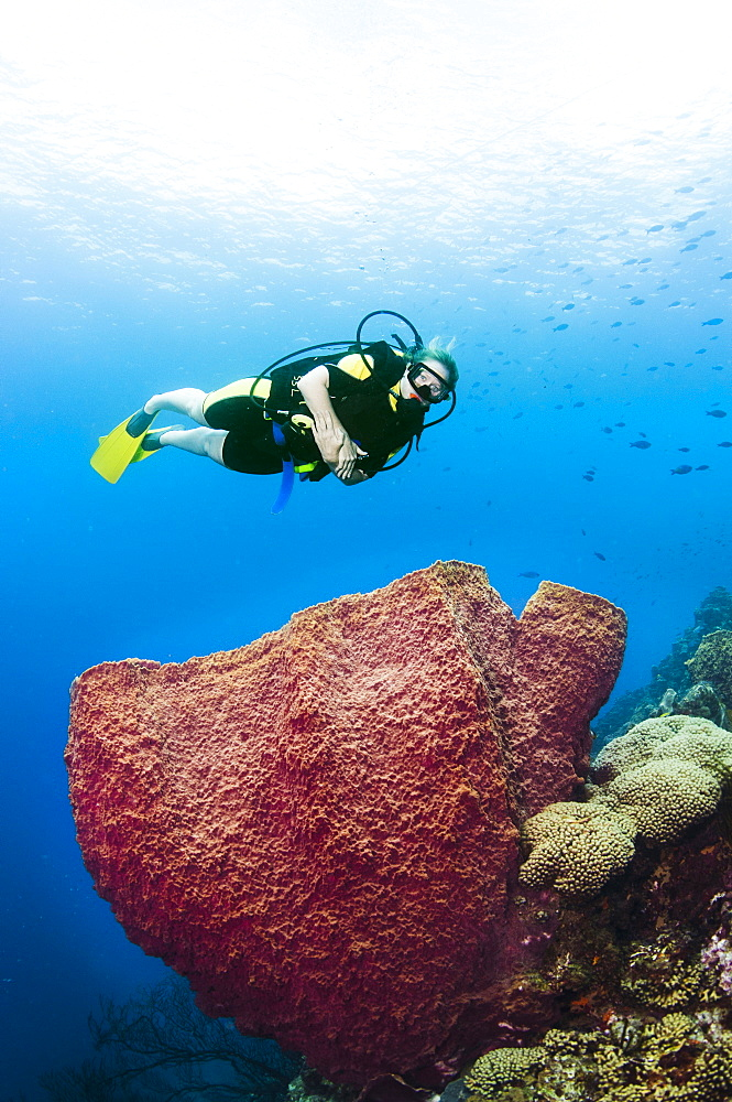 A female diver explores a barrel sponge, St. Lucia.