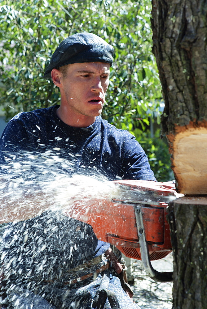 A young man cutting down a tree with a chain saw.