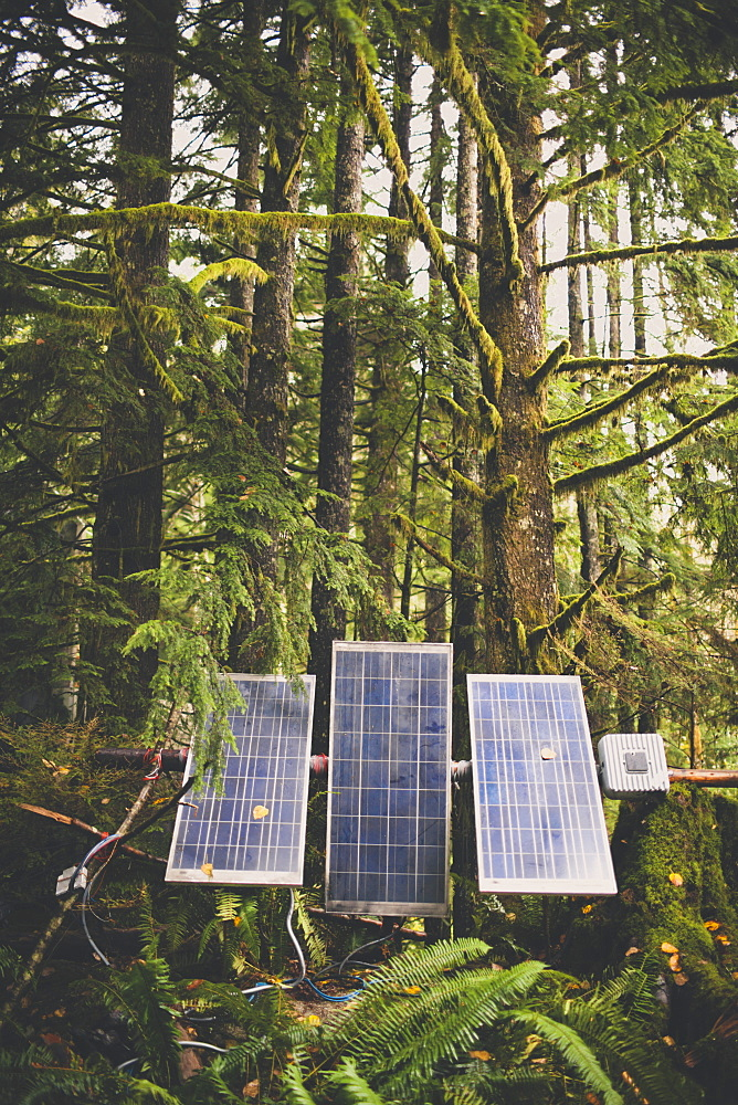 Solar panels set up in a lush temperate rainforest.
