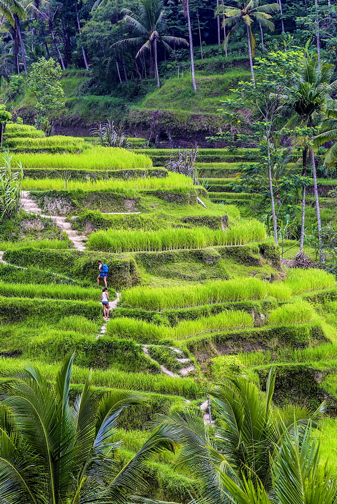 Unesco Rice fields.
