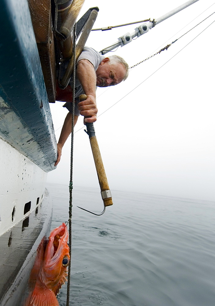 """Sept 24, 2008 20 miles offshore of Morro Bay California. Captain Bill Blue fishing for Black Gill Rock Fish off the coast of Big Sur California using the """"hook and line"""", or """"long-line"""" method. A new wave in sustainable commercial fishing is pushing fisherman to switch from higher impact methods of harvesting fish like trawling- to hook and line or long line harvest, United States of America"""