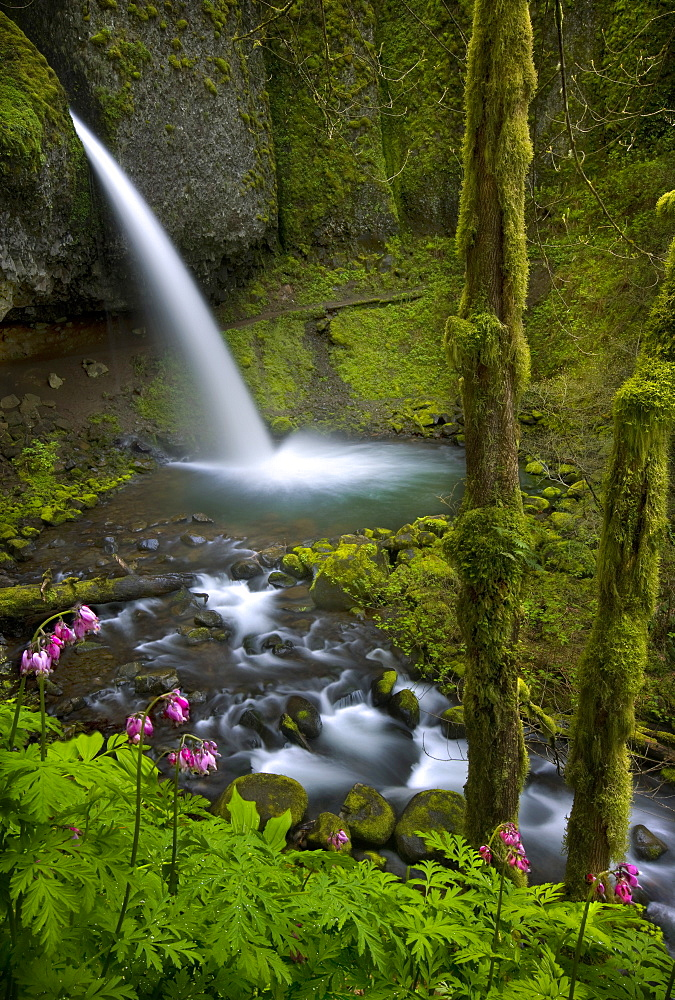 Wildflowers compliment this large waterfall in Oregon's Columbia Gorge.