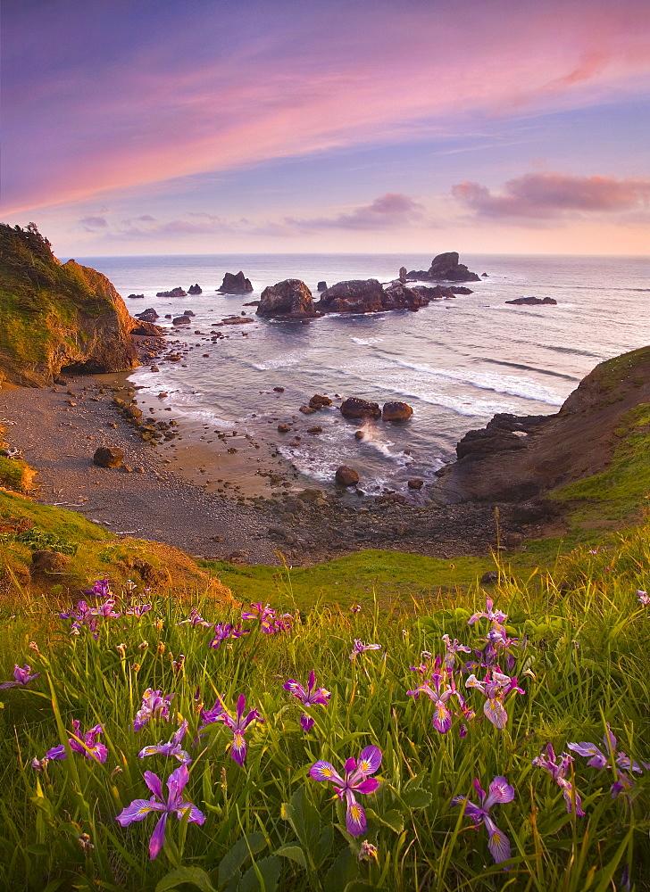 Wildflowers, sea and sunset on Oregon's North Coast.