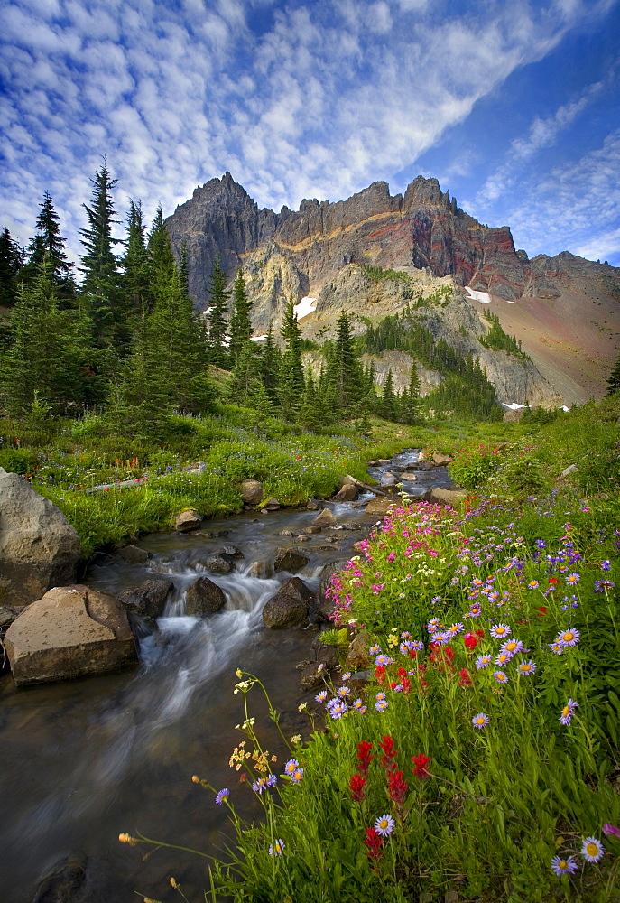 Beautiful wildflowers and stream beneath Oregon's Three Fingered Jack Peak.