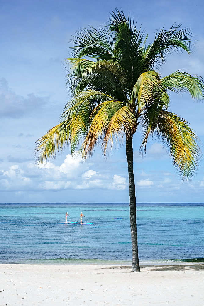 Two People Stand-up Paddleboarding In Oil Nut Bay, British Virgin Islands