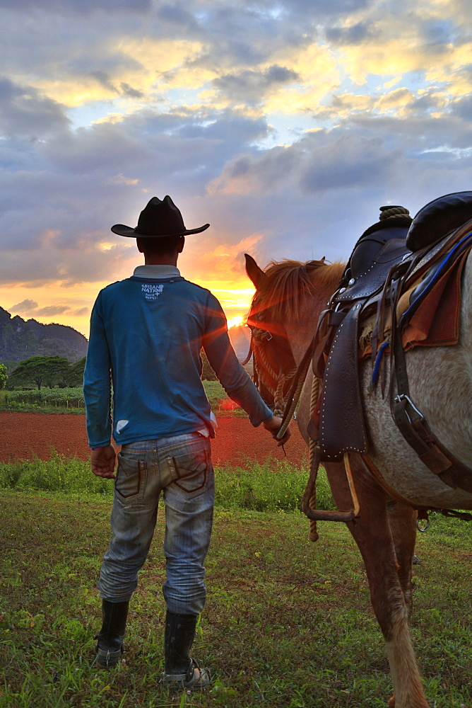 Vinales horses and campasino at sunset