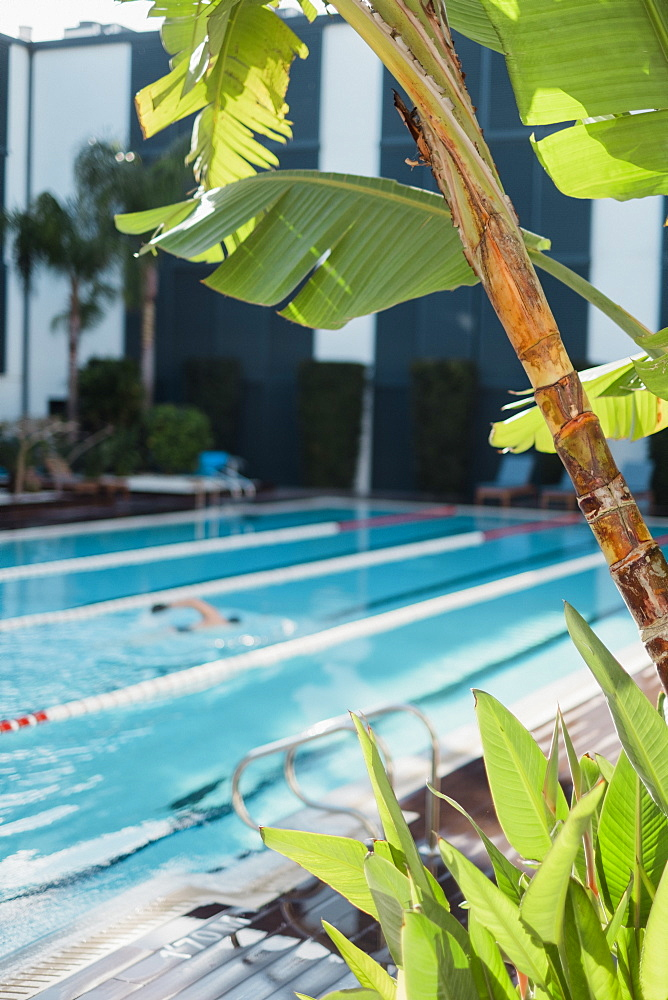 Palm tree in front of man swimming in hotel pool at daytime, Mallorca, Balearic Islands, Spain